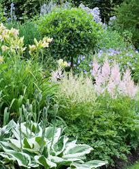 best 25 shadow plants ideas on pinterest shade garden shade