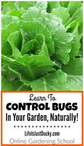 69 best insects and pests images on pinterest garden pests