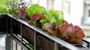 apartment plant ideas imanada balcony vegetable garden for