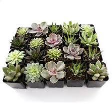 Indoor Plant Arrangements Succulent Live Indoor Plants Arrangements In Stylish Planter Pots