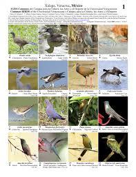 guia de la universidad veracruzana 2017 veracruz aves comunes del cus de la universidad veracruzana