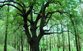 tree hd wallpapers 4229 amazing wallpaperz