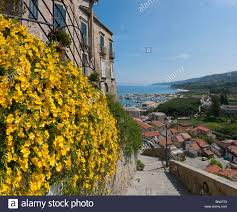 tropea calabria mediterranean italy houses homes flowers yellow