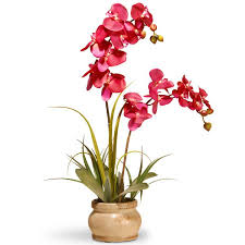 orchid flowers national tree co orchid flowers in pot reviews wayfair