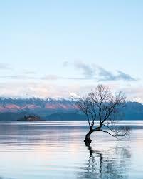 tree lake ripple and water hd photo by hamish clark