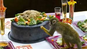 squirrel monkeys at zoo get special thanksgiving feast