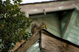 squirrel control and removal methods for the home yard and garden