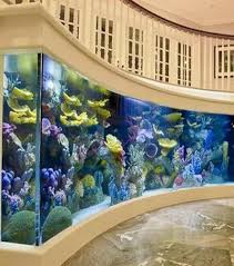 idee deco aquarium 14 idées pour mettre en valeur votre aquarium dans votre intérieur