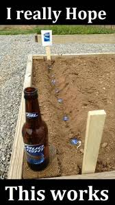 Funny Beer Memes - beer planting funny pinterest plants humor and memes