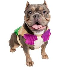 Pitbull Dog Halloween Costumes Minute Halloween Costume Advice Pet Parents