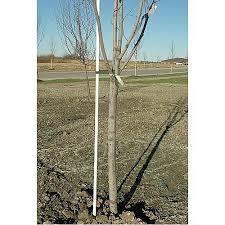 fiberglass tree stakes field staking amleo