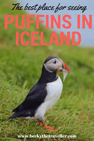 the best place for seeing puffins in iceland becky the traveller
