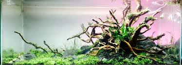 Aquascaping With Driftwood Nature Aquascape Page 2 258232