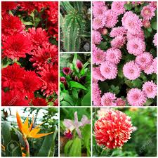 beautiful plants collage with beautiful flowers and plants in the garden stock photo