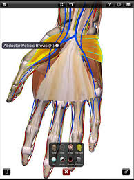 3d Human Anatomy Atlas Great Websites To Teach Anatomy Of Human Body In 3d Educational