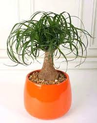 best indoor plants for low light low light houseplants musicyou co