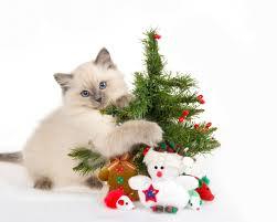 cat hug the christmas tree desktop background hd 2560x1600