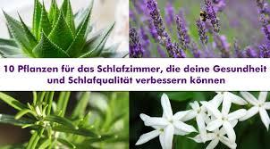 pflanzen für schlafzimmer 10 pflanzen für das schlafzimmer die deine gesundheit und
