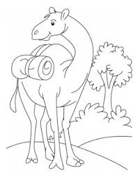 camel coloring page kids coloring pages