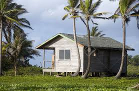 basic simple beach house cabana in jungle coconut trees big
