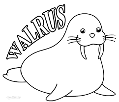 coloring page for walrus walrus pictures to print collection of solutions walrus coloring