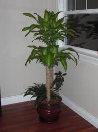Inside Home Plants by Pretty Pot Plants 49 Beautiful Decoration Also Pretty Indoor
