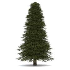 evergreen tree free download clip art free clip art on