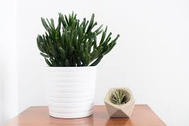 Easy House Plants Easy To Keep Houseplants The Private Life Of A Simple