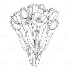 bouquet with tulip flowers in contour style isolated on white