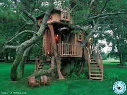 cool tree houses tree house wallpapers for desktop wallpapersafari