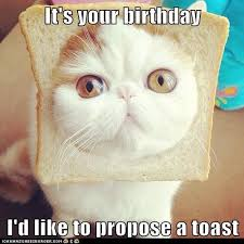Cat Toast Meme - it s your birthday i d like to propose a toast lolcats lol cat