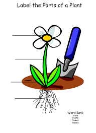 plants basic needs and parts process