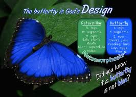 the butterfly is god s design