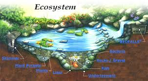 biotic factors of ecosystem producers consumers and decomposers