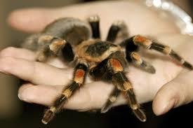 10 scary spider stories listverse