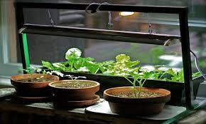indoor garden apartment indoor herb garden grow light growing