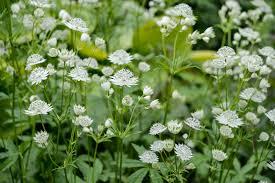 low light outdoor plants the best shade loving plants gardenersworld com