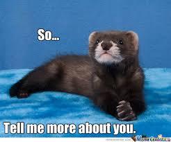 Ferret Meme - gentleman ferret by sylfaenn meme center