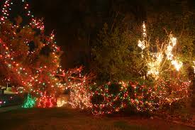 net christmas lights for small bushes christmas lights we love the stars too fondly