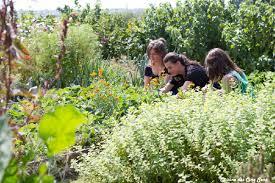 cuisine des cinq sens cours de jardinage en permaculture cuisine des cinq sens