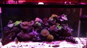 3 watt led aquarium lights aquaticlife expert series 46 inch 234 watt cree led light fixture 3