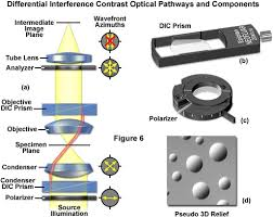 Path Of Light Through The Eye Zeiss Microscopy Online Campus Microscopy Basics Enhancing