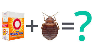 how can you get rid of bed bugs bed bug faq can baking soda kill bed bugs youtube