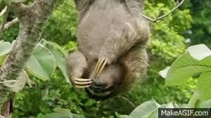 Angry Sloth Meme - sloth animated gif popkey