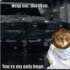Star Wars Cat Meme - star wars face swap online