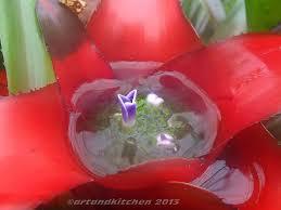 royal botanic gardens melbourne bromeliaceae artandkitchen