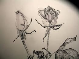 drawn rose closed pencil and in color drawn rose closed