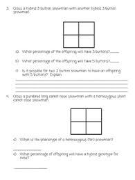 snowman punnett square practice worksheet by kinsley heaton  tpt with snowman punnett square practice worksheet from teacherspayteacherscom