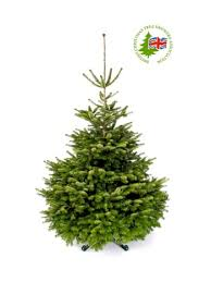 floric extra large christmas tree stand with water bluewater