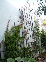 decor concrete walls and metal trellis with climbing plant for